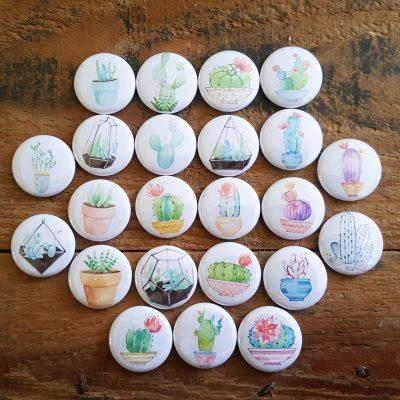 Collection complète Cactus